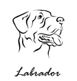 Labrador vector image vector image