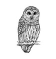 owl sketch hand drawn vector image vector image