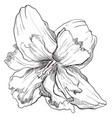 hand drawing flower 8 vector image vector image