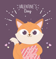 happy valentines day cute fox with gift box vector image