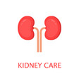healthy kidneys in flat style left and right vector image