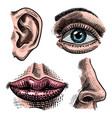 organs anatomy face detailed kiss or vector image