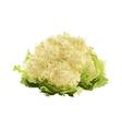 cauliflower of blots vector image