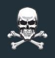 pirates skull and bones vector image