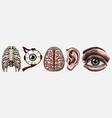 anatomy human bones organ systems rib cage vector image vector image