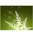 beauty fern background vector image vector image