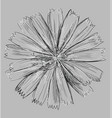 grey flower 2 vector image vector image