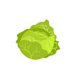 head of cabbage icon vector image vector image