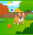 little corgi standing on green meadow and growling vector image vector image