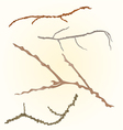 Sprigs- twig tree various branch vector image vector image