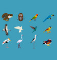 various sets of birds blue background vector image