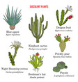 medicinal and edible succulent plants collection vector image vector image