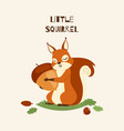 squirrel little hugging acorn and standing on vector image