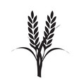wheat and rice icon logo designs vector image