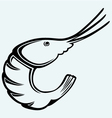Boiled shrimp sketch vector image