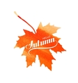 Hello Autumn label on watercolor maple leaf vector image vector image