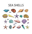 ocean exotic set with sea shells and stars vector image vector image