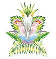 parrot mirror tropical leaves white background vector image vector image