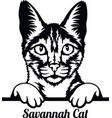 savannah cat - cat breed cat breed head isolated vector image vector image