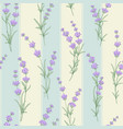seamless pattern of lavender flower vector image