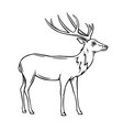 wild deer icon vector image