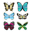 butterflies types collection vector image vector image