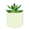 hand drawn succulent flower in pot vector image