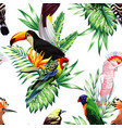 parrot maccaw and toucan on branch vector image vector image