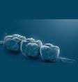 3d human teeth closeup teeth for medical vector image