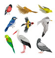 birds as warm-blooded vertebrates or aves