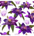 clematis purple flowers and leaves seamless vector image