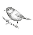 cute little bird vector image vector image