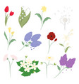 flower floral set on white background for graphic vector image