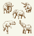 Hand drawn elephant set vector image vector image