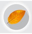 tobacco yellow vector image vector image