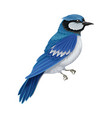 blue jay as warm-blooded vertebrates or aves