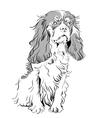 cavalier king charles spaniel vector image vector image