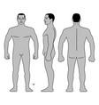 fashion man body full length bald template figure vector image vector image