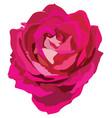 flower 4 vector image