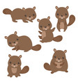set of cute beavers set of cute beavers vector image