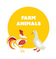 cute pets poultry rooster and duck isolated vector image
