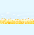 wheat field ready for harvest vector image
