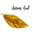 autumn yellow leaf isolated on white background vector image vector image