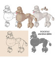 hand drawn poodle dogs sketches vector image