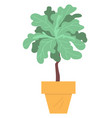home plant in pot isolated house interior decor vector image