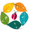 Leaves in Circle with Ladybug Insect Nature Symbol vector image vector image