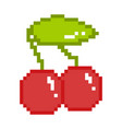 sweet cherry vector image vector image