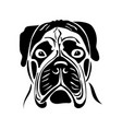 portrait of a dog of the bullmastiff breed vector image