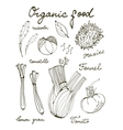 Outline set of fresh hand drawn vegetables vector image