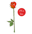 single red rose flower beautiful vector image